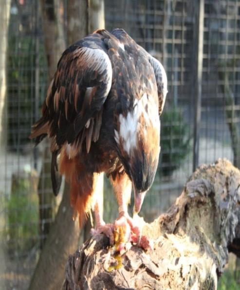 Featherbed Animal Sanctuary