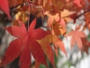 Autumn foliage in Leura